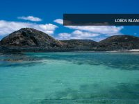 fuerteventura-beach-9